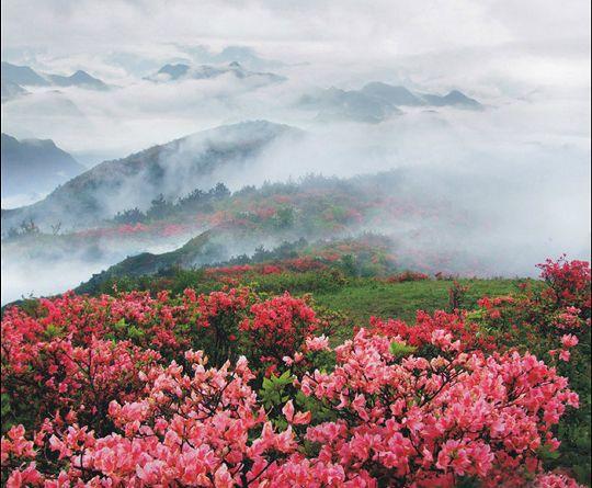 据丹霞山风景区的黄大维介绍,这两年来,森林步道等一批重点道路